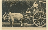 Picture of Bullock Cart & Driver