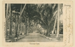 Picture of Coconut Lane