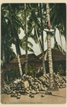 Picture of Coconut Plantation by Malaya Natives