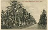 Picture of Coconut Plantation, Kuala Selangor