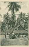Picture of Coconut Plantation, Singapore