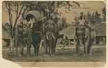Picture of Elephants, Kedah